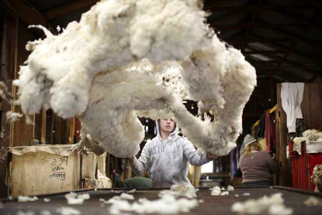 21 unique qualities of Australian Merino wool
