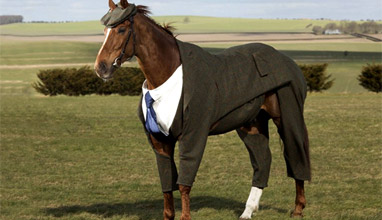 The world's first Harris Tweed three-piece suit created for a horse