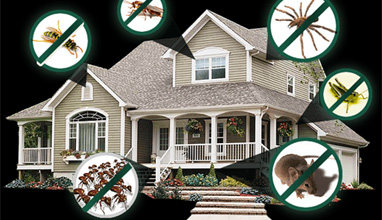 4 Advantages of Having Home and Pest Inspections