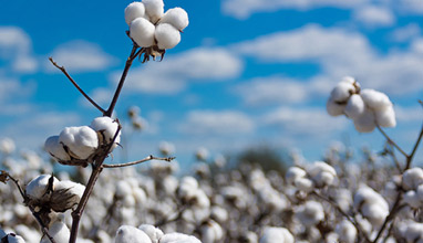 Supreme Green Cotton - a unique sustainable solution for the textile supply chain