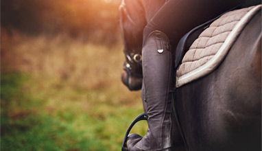 5 Horse Riding Tips for Beginners